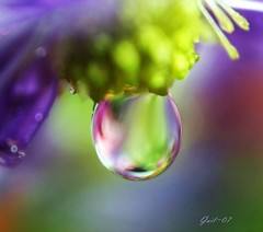 macro water drop photo by Linda Gail.