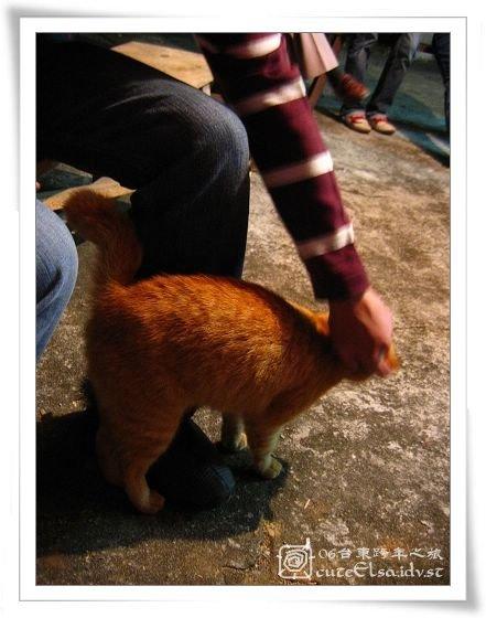 台東巴浪家-肥野貓很愛磨磳
