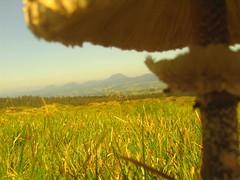 la chaine des puys sous un champignon
