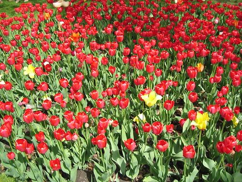 2005 Tulip Time 09