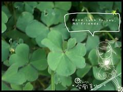 2005-06-27 clover copy