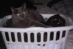 Artemis in the laundry basket
