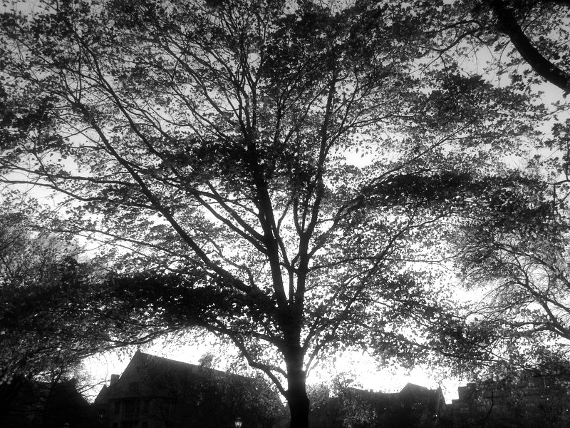 A Backlit Tree on the Quad
