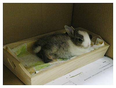 約克夏日記_20051130_39元新兔床