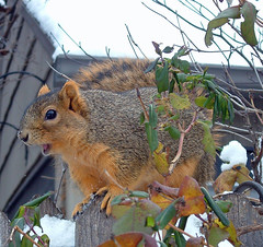 28 talking squirrel