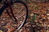 Bike with leaves