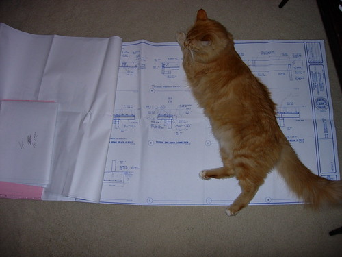 Cat and plans