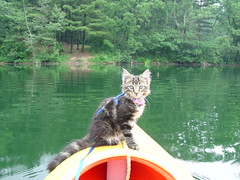 Kitten on Kayak