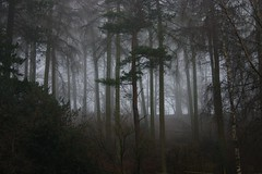 Misty Forest photo by Pete Lewis