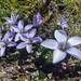 Flores en el trekking Nevado de Chañi