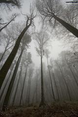 foggy trees photo by iPhotograph