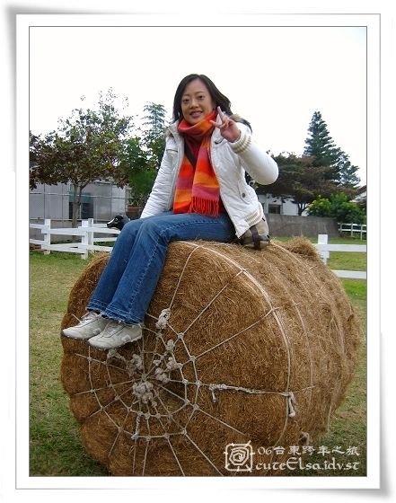 台東初鹿牧場-捆草
