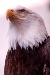 Mighty Eagle photo by Melissa_A