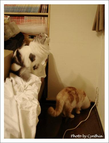 迷惘的小貓們