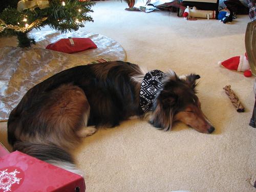 Tired Puppy (by Matt Stratton)