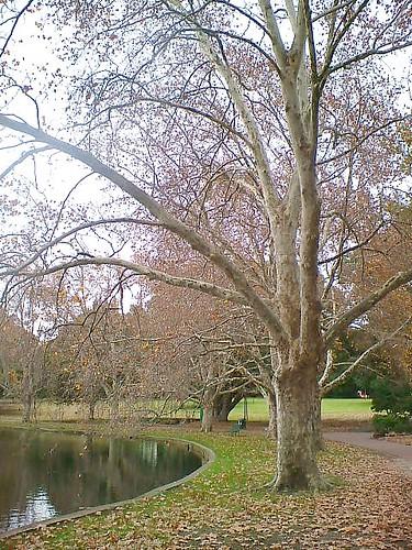 Hyde Park4