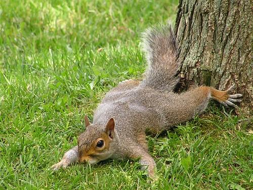 Jersey - Squirrel Splat!