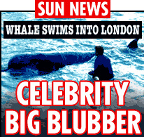 Whale Swims into London - The Sun headlines