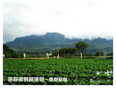 夏季感冬之旅_0118_鹿野採草莓