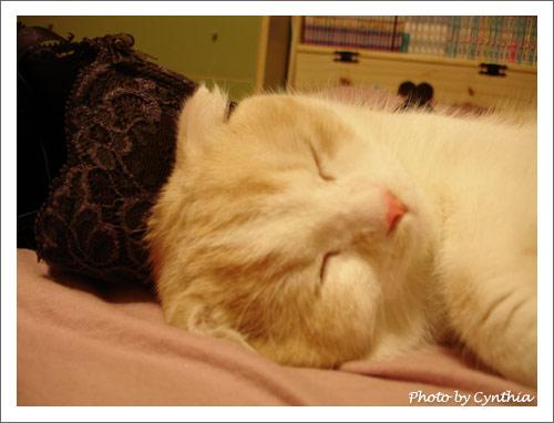 枕著胸罩睡最好睡