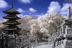 Pagoda dreams (IR) photo by EugeniusD80