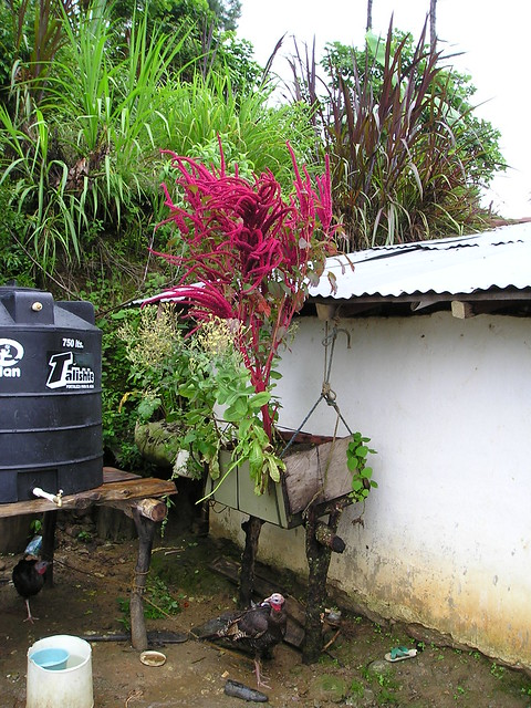 Hawaii Rainwater Catchment Systems Association is a partnership of business, community, and government concerned with the health, safety, technology and services of