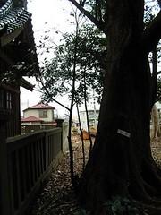 千葉市稲毛区宮野木町の神社「甲大神(かぶとおおかみ)」