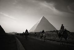 Caravan to the Pyramids photo by Foto Blitz Color