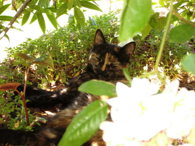kitty in the flower bed