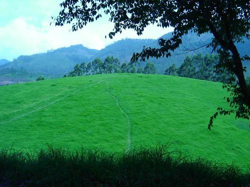 Grass-Land