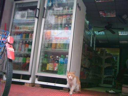 groceries' store's cat