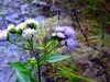 Pretty Purple Mountain Flower
