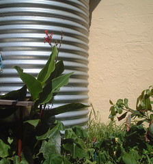 rainwater tank, water, harvesting, stormwater, sustainable