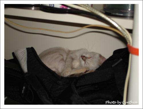 包包很好睡