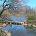 Jackson Park Japanese Garden