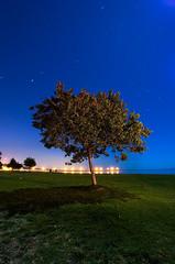 Lone Tree, Goleta photo by Toby Keller / Burnblue