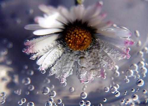 ...Whoops-a-Daisy... (by RINAJO.DK)