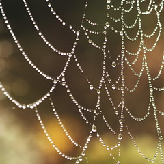 Morning Light on Web photo by Whirling Phoenix