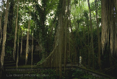 in the forest, ^o^  looking for Treebeard...♫ sacred monkey forest sanctuary in ubud ♫ photo by bocavermelha-l.b.
