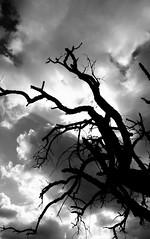Dead tree soul reaching sky photo by Cracas