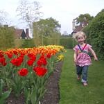 Tip Toe through the Tulips<br/>22 Apr 2007
