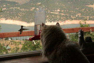 Humming birds and cats