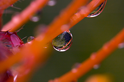 Droplets and Reflections