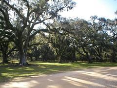 Jungle Gardens, Avery Island, Louisiana