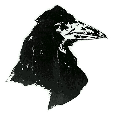 raven_head
