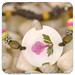 903 - Flower bracelet