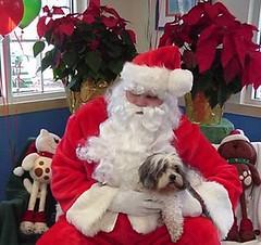 Santa lap dog