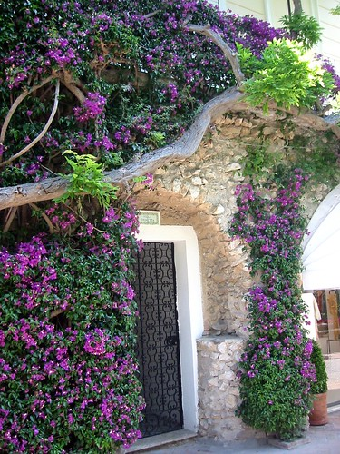 Bougainvillea in Capri