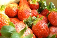 湖丘有機農場之四--垂涎欲滴的現採草莓