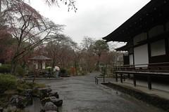 嵐山 天龍寺